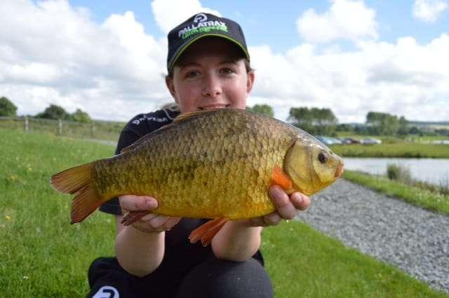Brown Goldfish